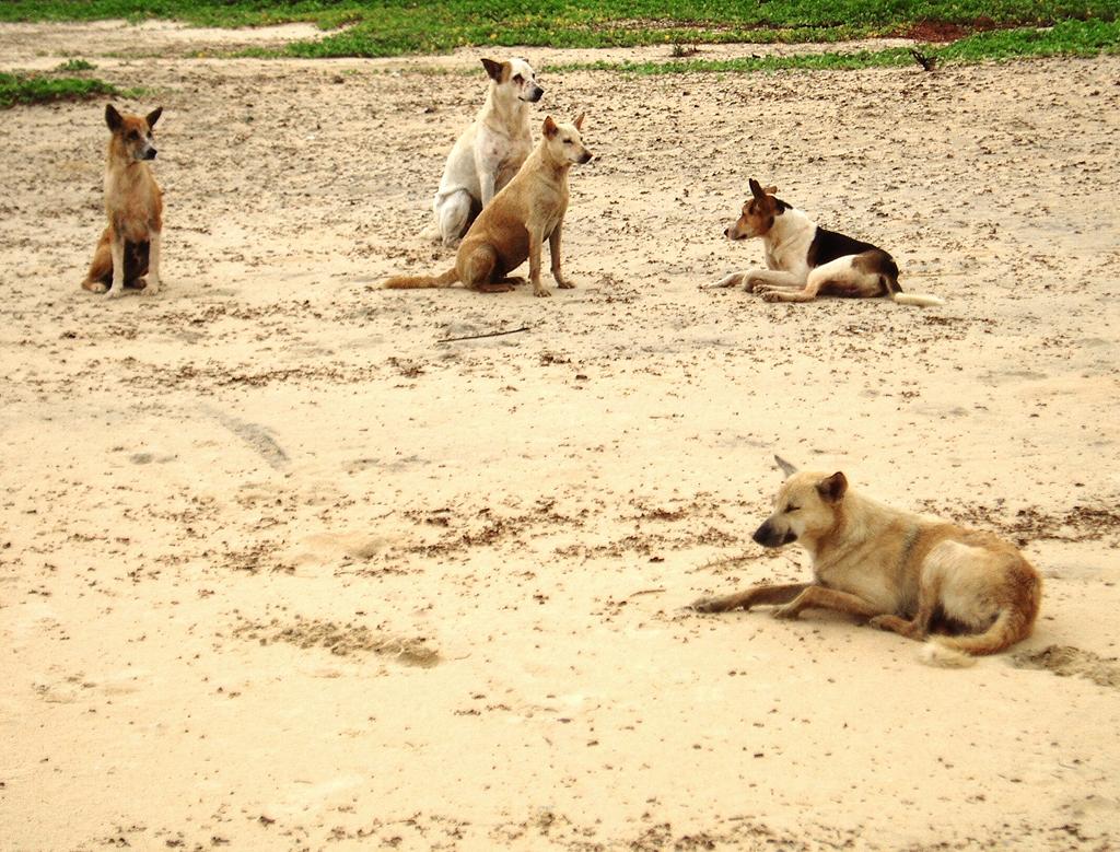 Собак перестанут убивать