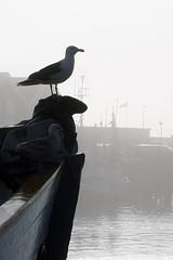 Evil Sea Gulls