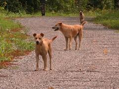 hound(0.0), dingo(0.0), irish terrier(0.0), dhole(0.0), animal(1.0), dog(1.0), pet(1.0), street dog(1.0), mammal(1.0),