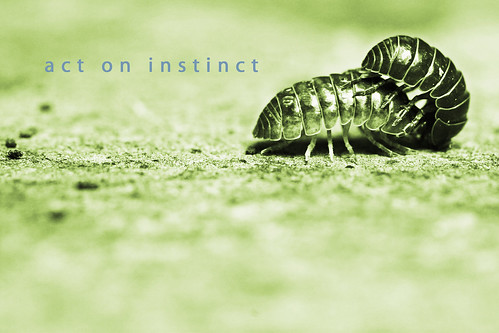 act on instinct