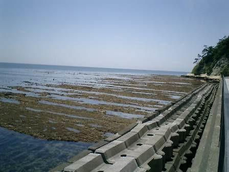05.05.26 大潮の磯、鎌倉 坂ノ下~稲村ガ崎~七里ガ浜。http://mitch1.blog.so-net.ne.jp/2010-06-30-3