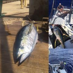 animal, tuna, fish, fish, jigging,