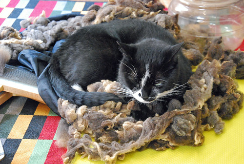 Melvin cat occupies California Variegated Mutant wool for Spindlers Tour de Fleece 2015