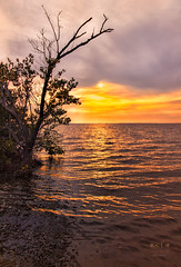 Deep in the Mangroves at Sunset