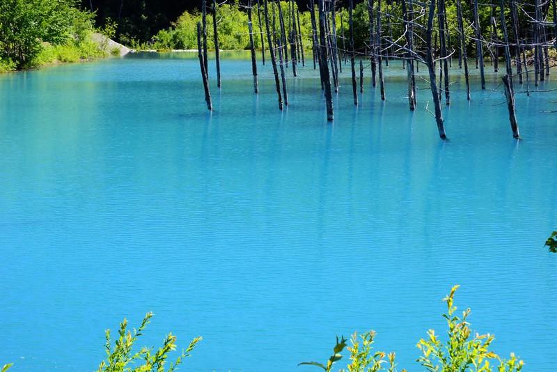 青い漣 a ripple of light blue