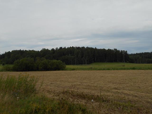 Niittyä Espoon Leppäsillan ja Leppävaaran Stadionin välillä 23.7.2015 - Niittyhoitohavainnollistus