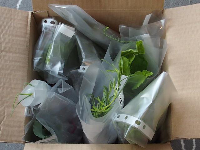 Unboxing perennial plants