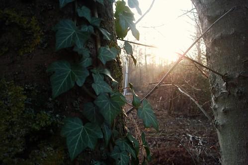 Soleil de décembre