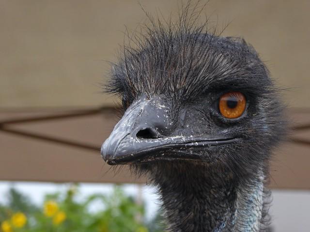 Hello, Mr. Emu, Panasonic DMC-ZS40