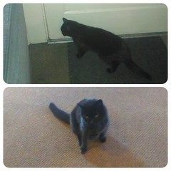 Oh Blackie, you are so indecisive! I let you out, and within five minutes, you are back in.  #blackiethehostelcat