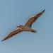 Birding-28-Jan-17-9 by falirana79