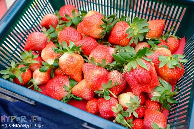 劉正男高冷草莓園 (9)