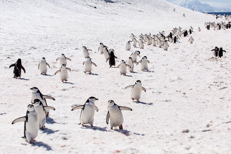 Penguin Highway, Bailey Head