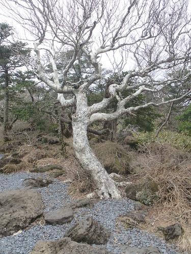 Co-Jejudo-Hallisan-Montée-Yeongsil (20)