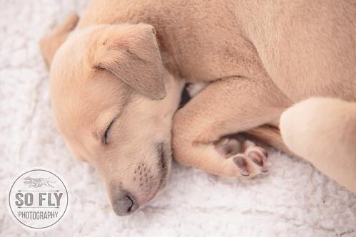 Puppy-8854