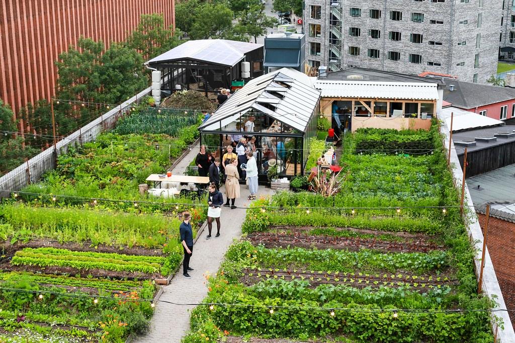 ØsterGro, jardin communautaire sur les toits à Copenhague - Photo de Henning Thomsen