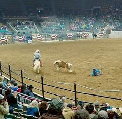 Buck riding