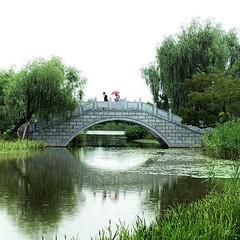 半烟半雨溪桥畔,疏懒意何长 Here at the bridge whether rain or shine....  #phoneonly #onlyphone #iphonegraphy #phonegraphy #shanghai #闵行 #上海 #dailyphoto #七宝 七宝向北的一个公园