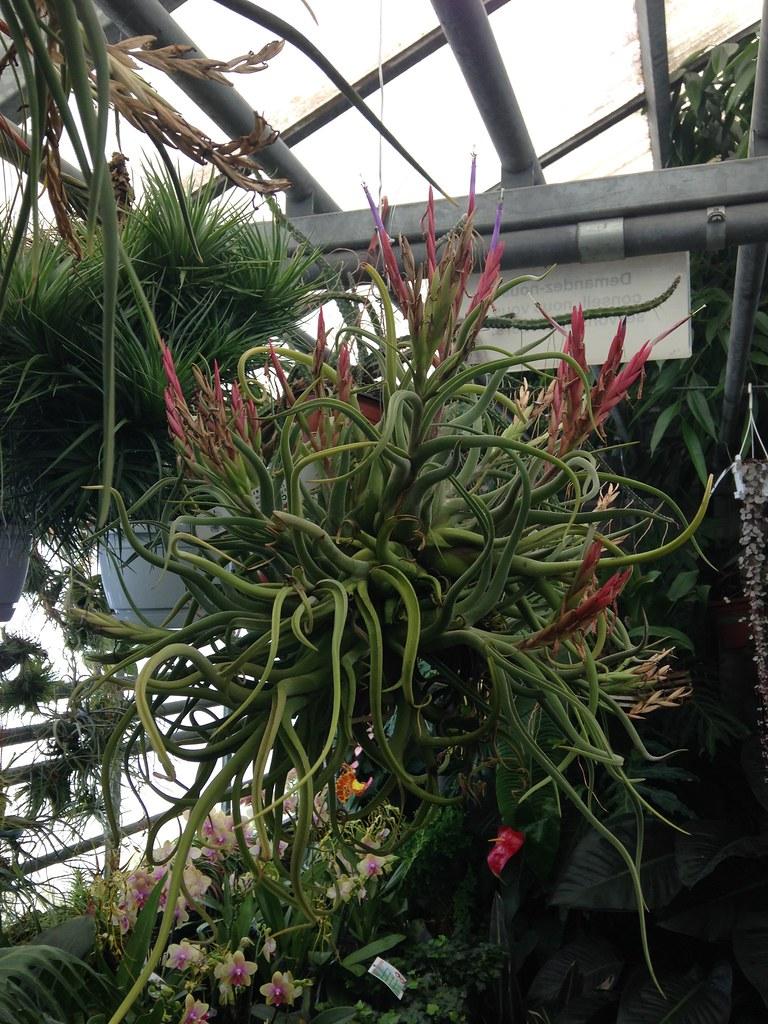 Orchidarium de Prangins 18684759414_d2eb70b053_b