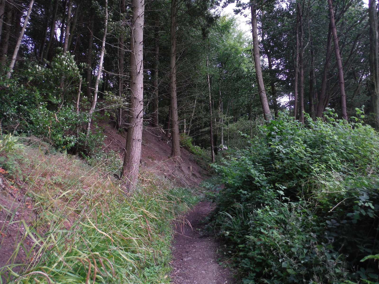 Historic Approach Lane to Old Wardour Castle SWC Walk 252 Tisbury Circular via Donhead St. Andrew