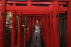 red, shinto shrine, shrine, aisle, torii, column,