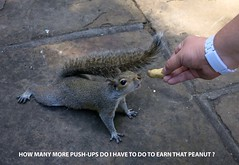 Push-Up's  for Peanuts