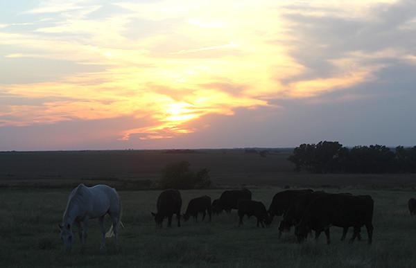 horses-sunset