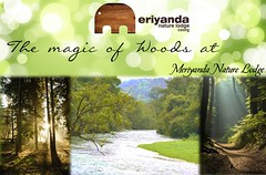 Meriyanda Nature Lodge- A boutique resort in Coorg