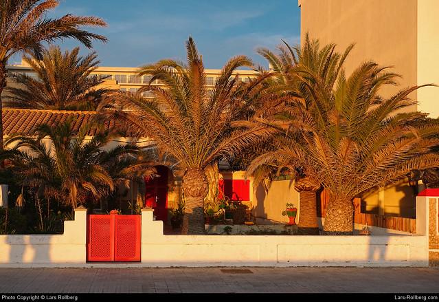 Palms, El Arenal, Mallorca, Spain
