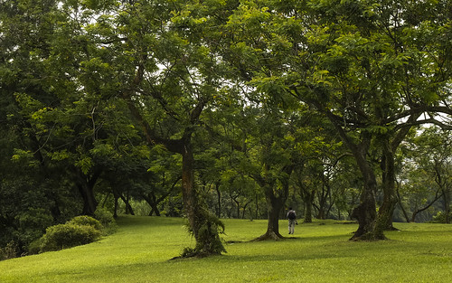 wanderer photographer park garden chinesegarden singapore landscape nature