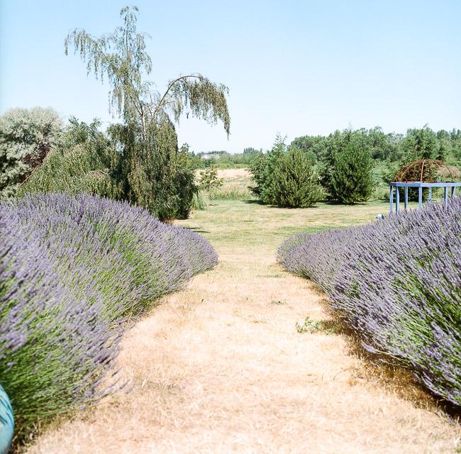 jardin du soleil-1