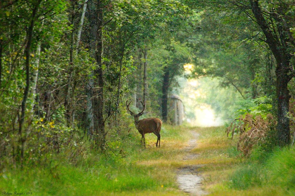 Bosque de Chambord