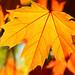 Sonbahar yaprak (autumn leaf) by Talip Çetin