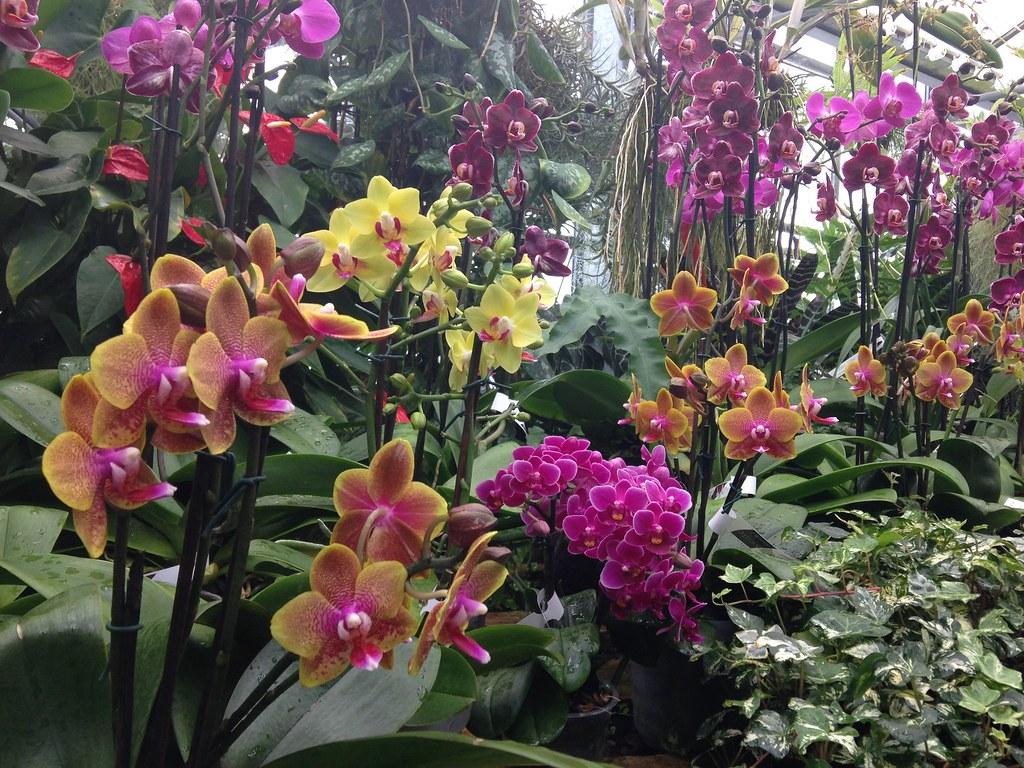 Orchidarium de Prangins 19120424599_0fa958ddc4_b