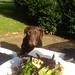 Indy loved food! by MaureenduLong