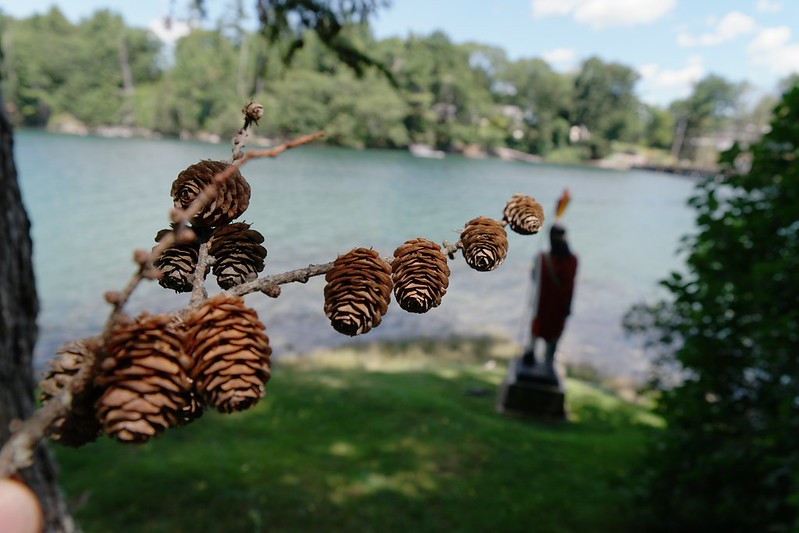 Pine Cones and Indian statue. Maine.