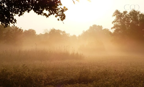 A wonderland...