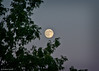Almost Full & Almost Blue Moon, July 30, 2015