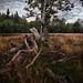 Aged timber (explored) by ramerk_de