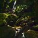 Lost City Trek - Trek de la Ciudad Perdida - Lost Waterfall 🇨🇴 by tristan29photography