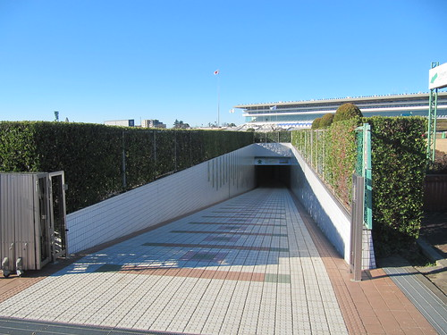 中山競馬場の内馬場への地下通路