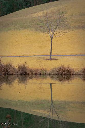 meadowlark background landscape reflection tree water winter vienna virginia unitedstates us