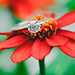 I'm getting married. by Bokeh Eyes