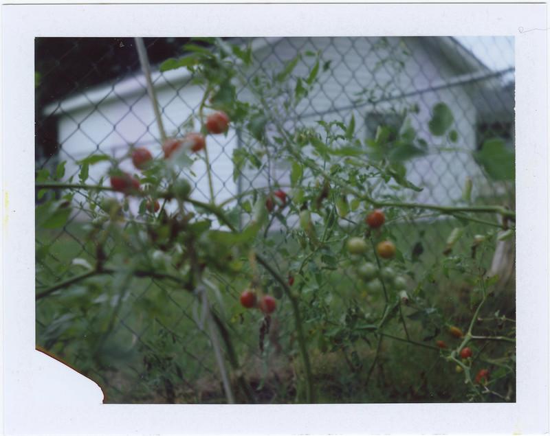 2015.08.10_ polaroid summer _lemon
