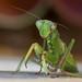 Mantis Mk2 (Explored) by Keith Williamson
