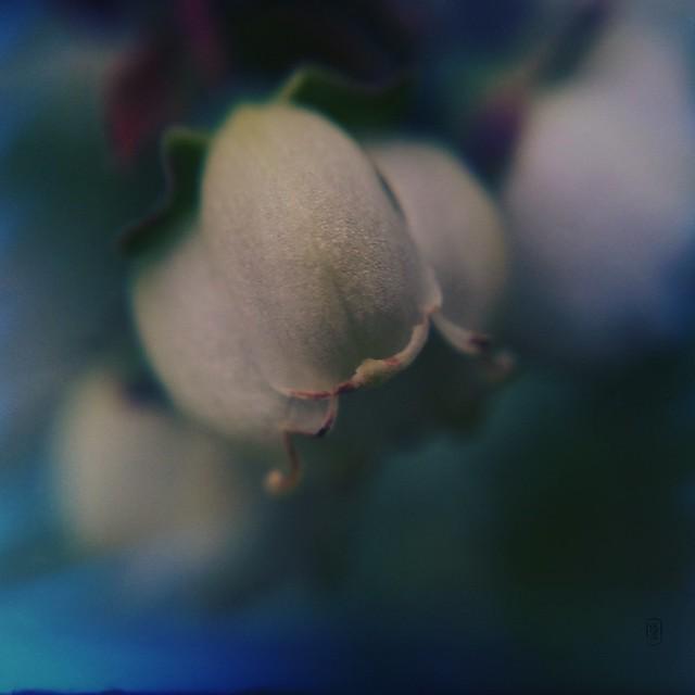 """blueberry dreams ~1"""