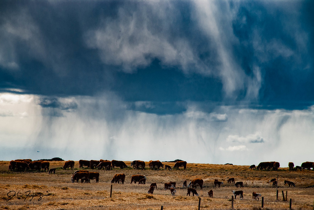 Herd And Storm