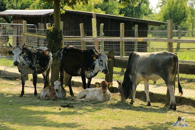 Tierpark Krüzen 03.07.2015  68