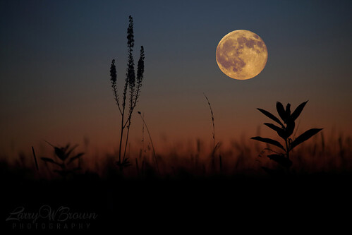 virginia fullmoon moonrise bluemoon bigmeadows shenandoahnationalpark july2015