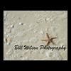 Starfish by wildlifephotonj